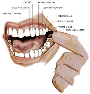dentici-gif